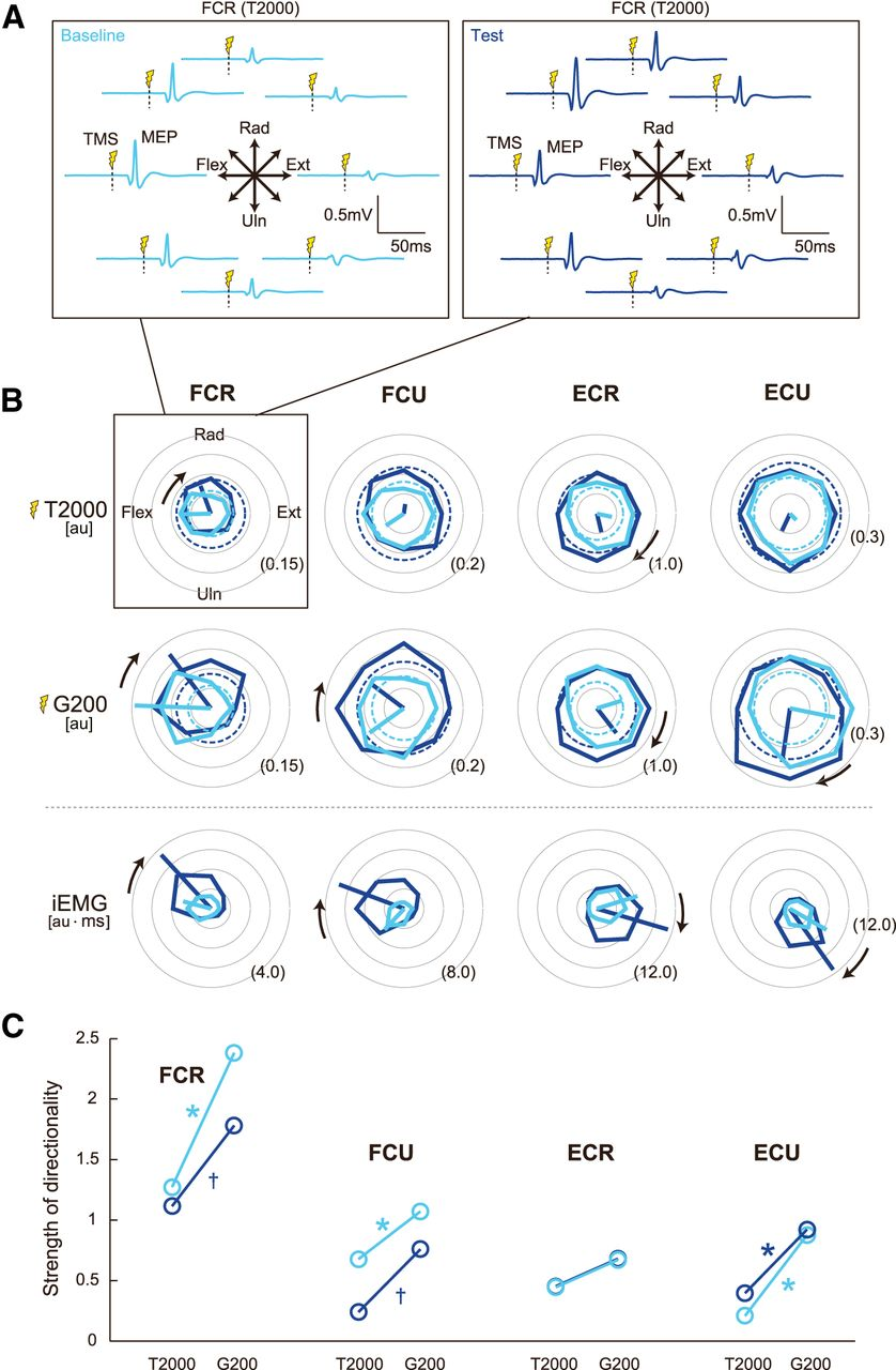 Functional Modulation of Corticospinal Excitability with