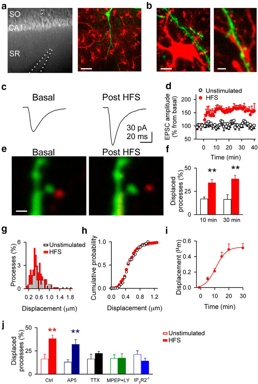 Structural and Functional Plasticity of Astrocyte Processes