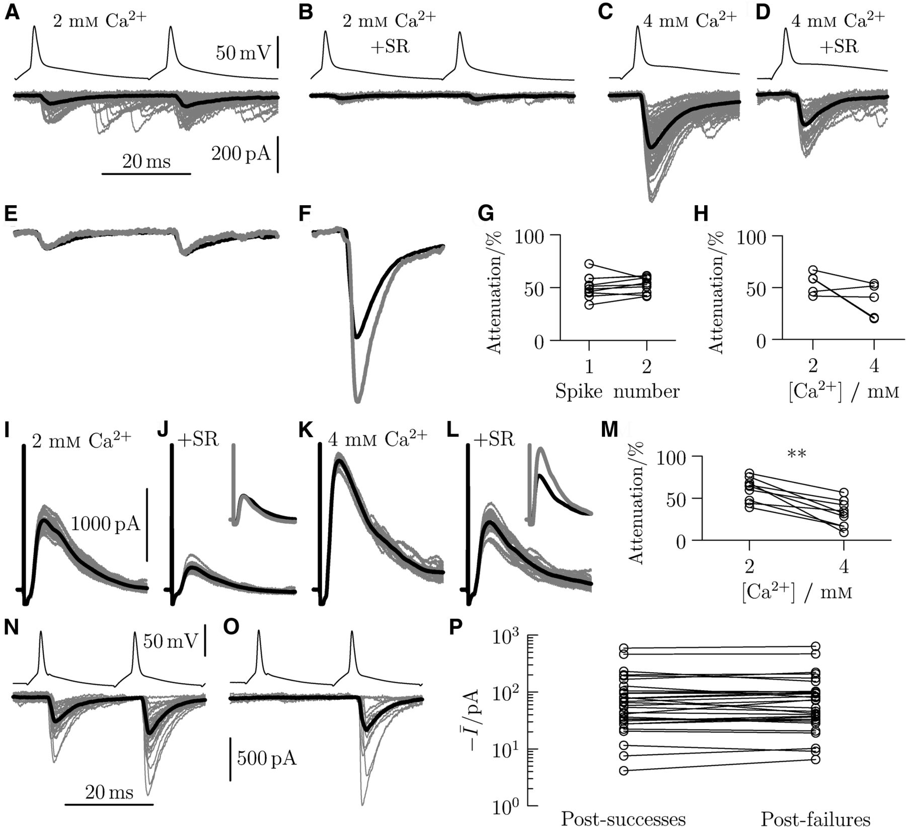 The Recurrent Case For Renshaw Cell Journal Of Neuroscience Figure 417b Capacitor Filter Circuit Positive And Negative Half Download