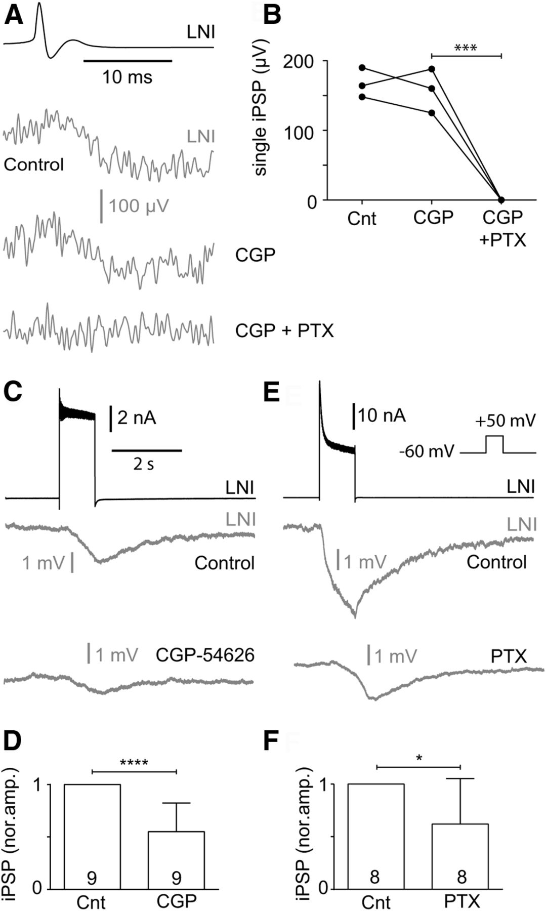 Rapid and Slow Chemical Synaptic Interactions of Cholinergic