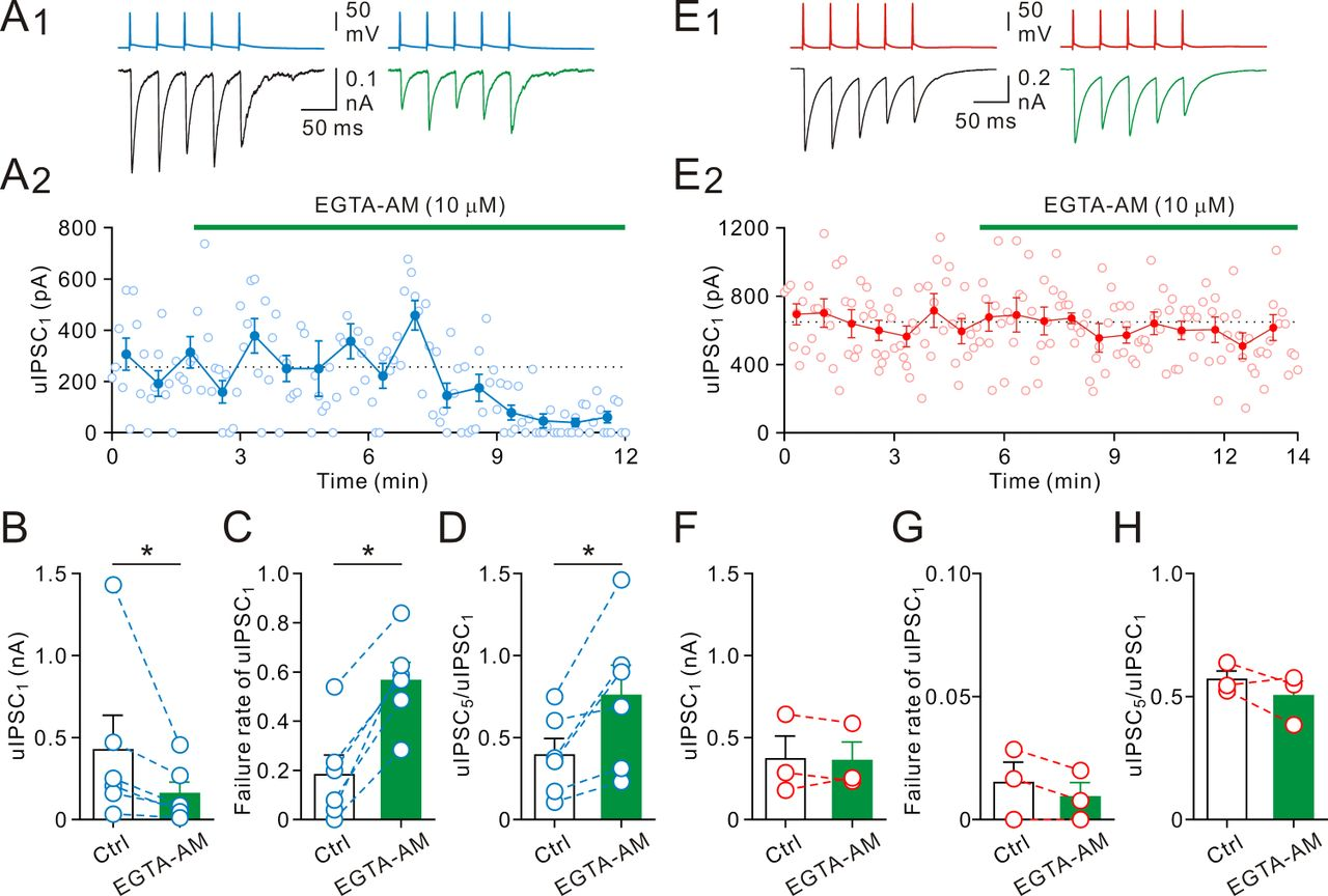 Rapid dynamic changes of dendritic inhibition in the dentate gyrus download figure biocorpaavc