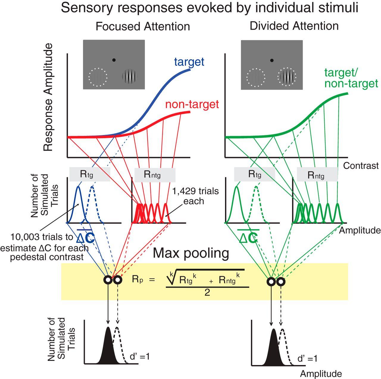 Sensory Gain Outperforms Efficient Readout Mechanisms in