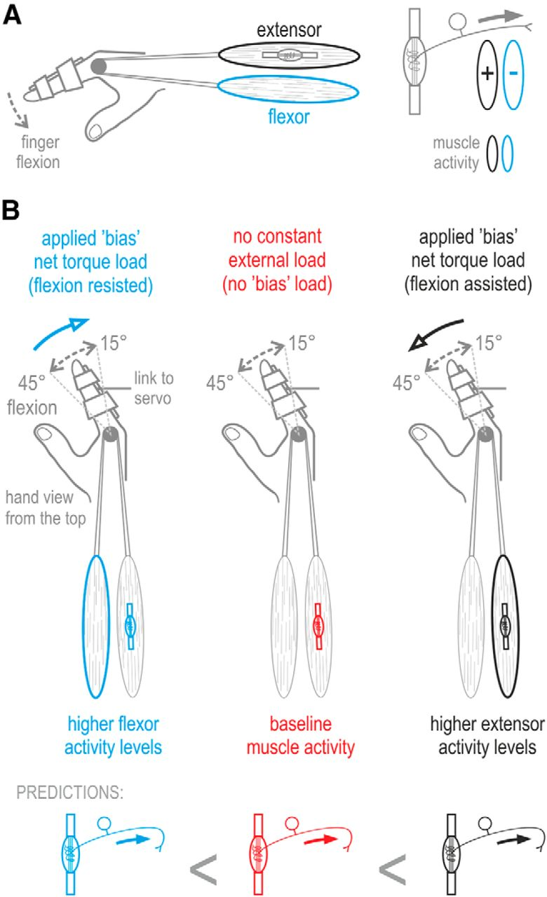 Human Muscle Spindle Sensitivity Reflects The Balance Of Activity Active Emg Hz Wiring Diagram Download Figure