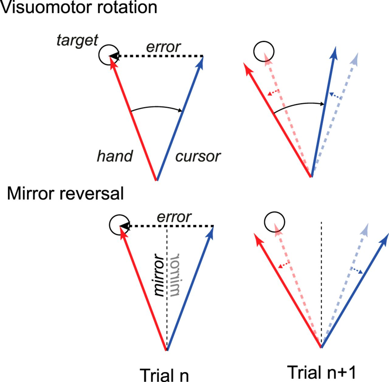 Mirror Reversal and Visual Rotation Are Learned and Consolidated via
