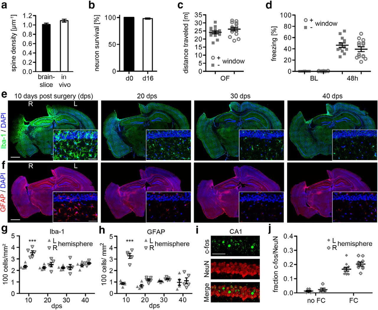 Long-Term In Vivo Imaging of Dendritic Spines in the