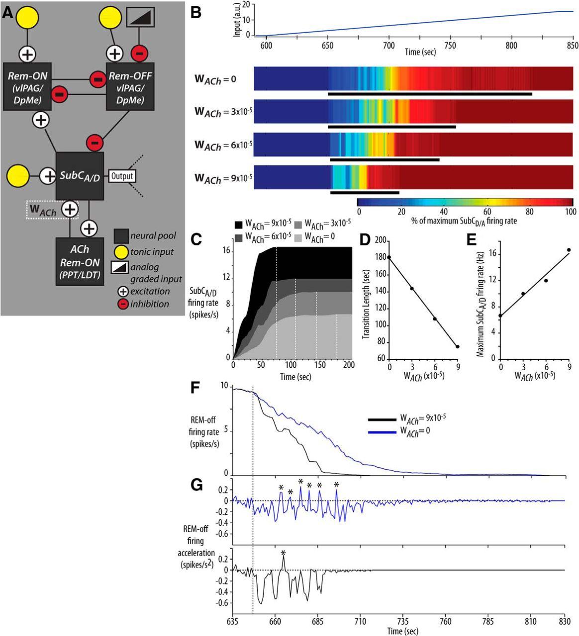 Endogenous Cholinergic Input To The Pontine Rem Sleep