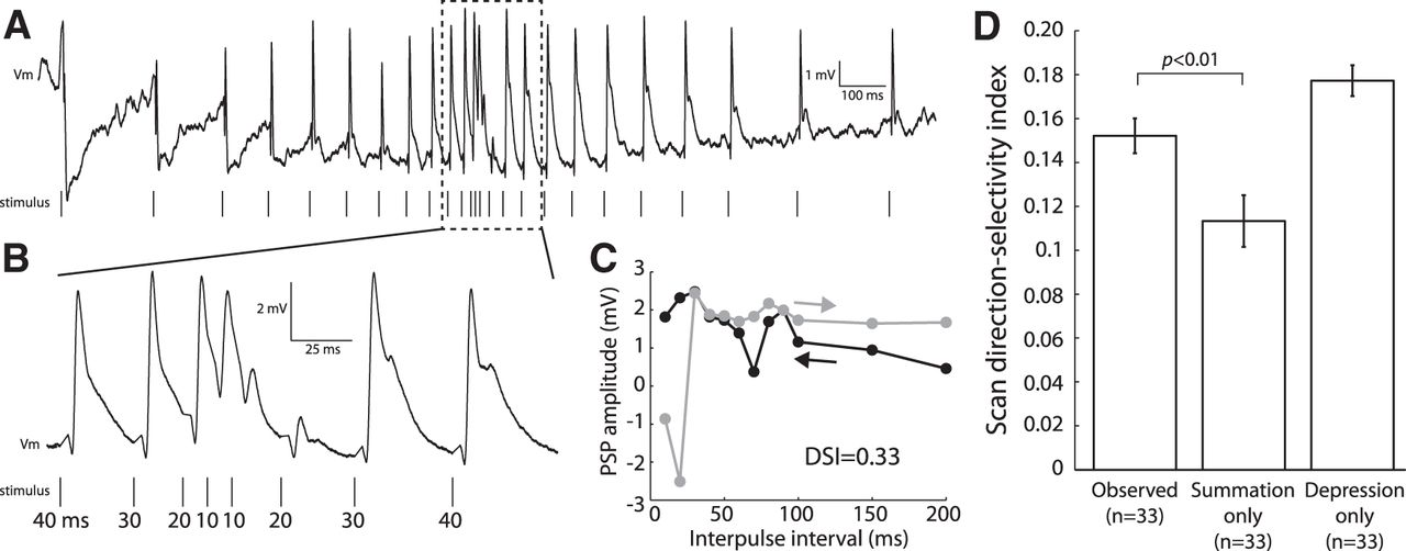 Short-Term Depression, Temporal Summation, and Onset Inhibition