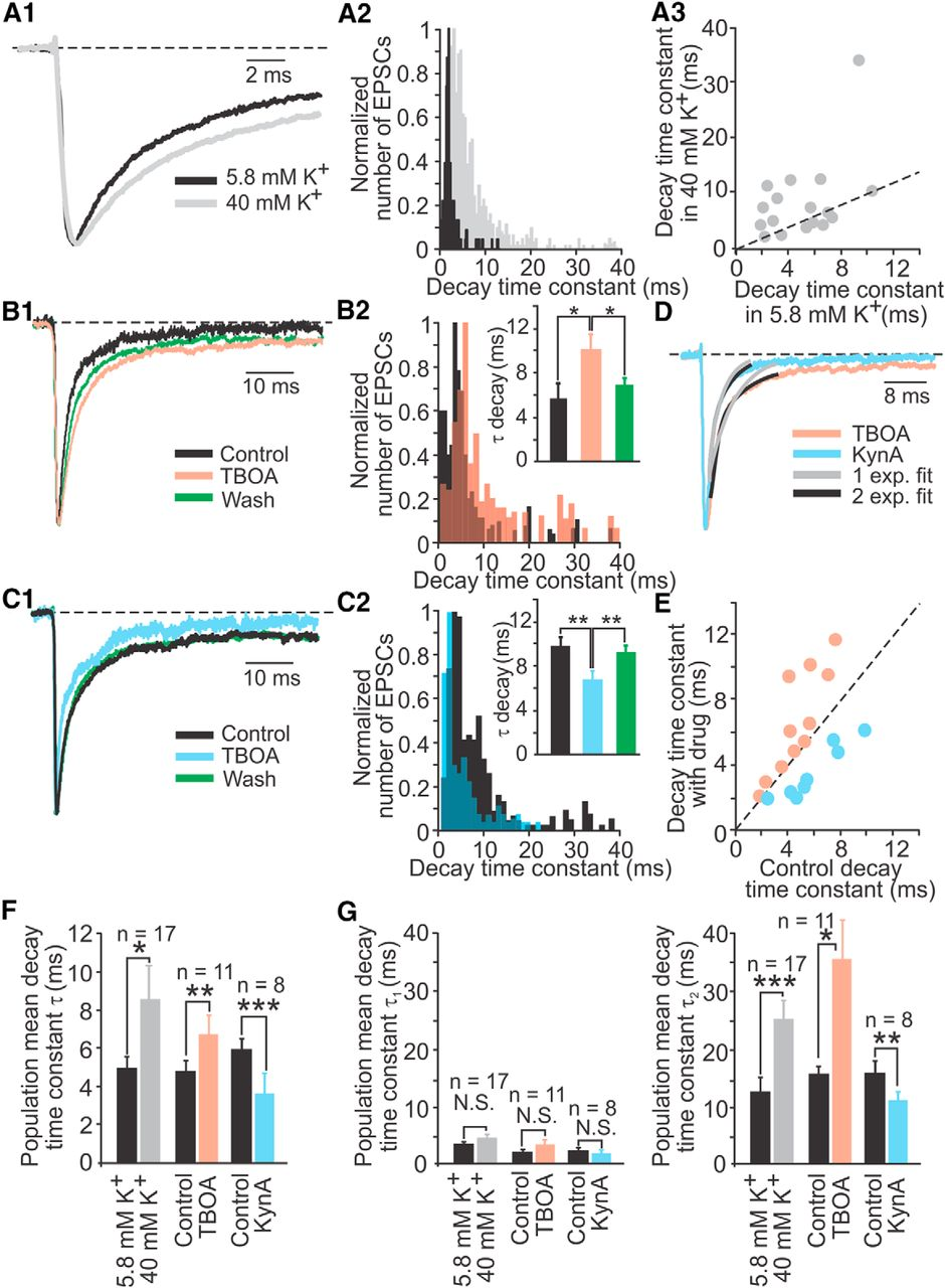 Glutamatergic signaling at the vestibular hair cell calyx synapse.