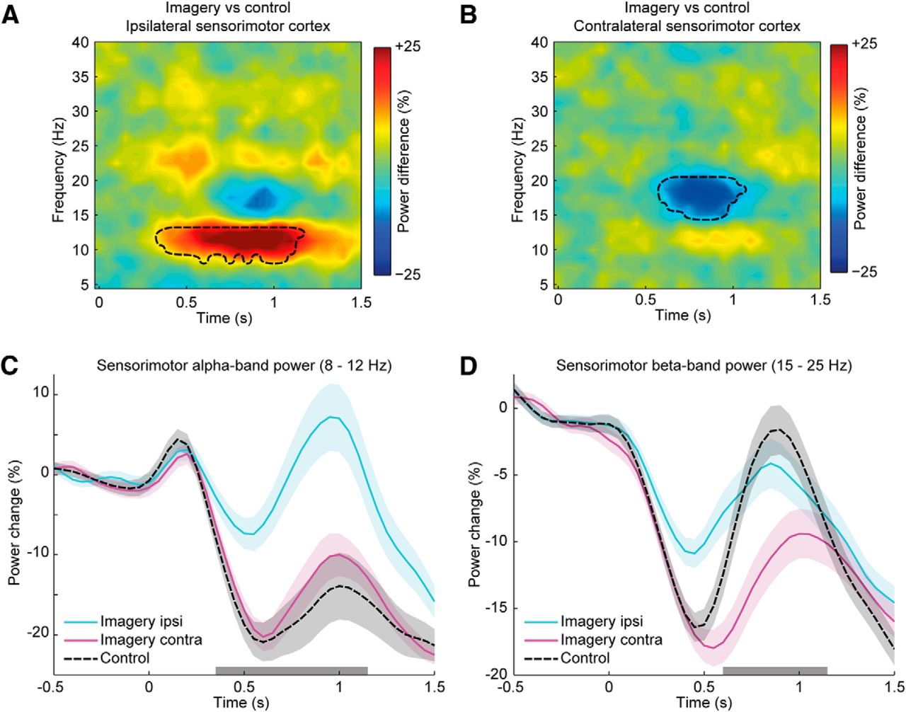 Distinct Roles for Alpha- and Beta-Band Oscillations during