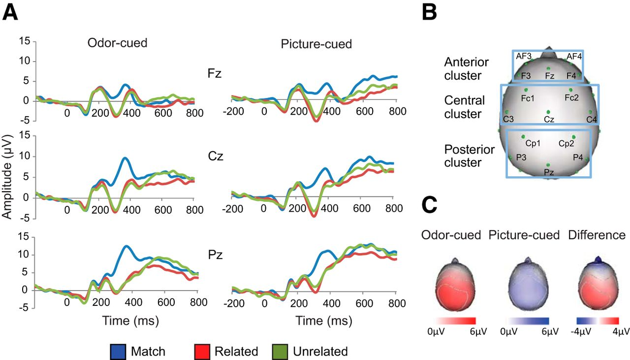 A Designated Odor–Language Integration System in the Human Brain