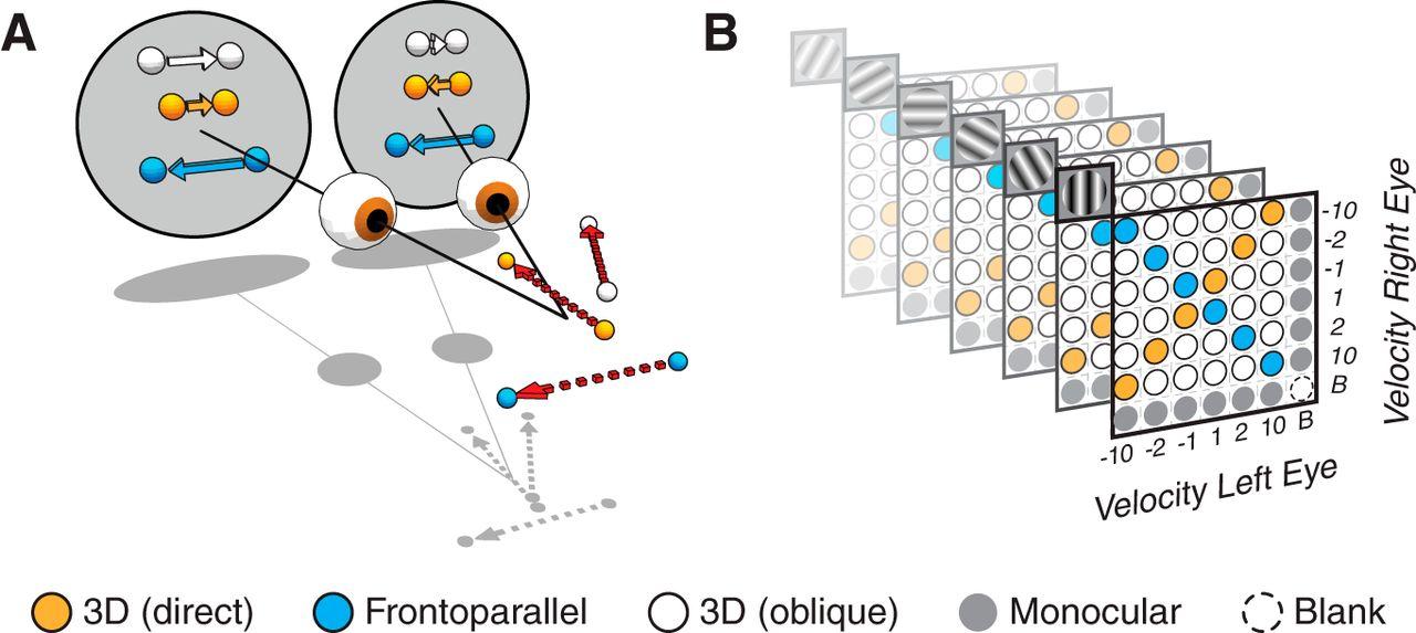 Area MT Encodes Three-Dimensional Motion | Journal of Neuroscience