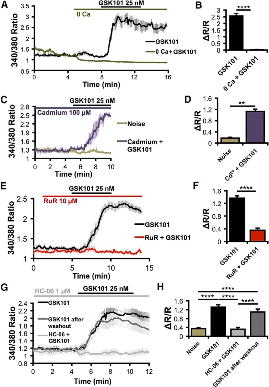 Swelling And Eicosanoid Metabolites Differentially Gate Trpv4 Hc12spi Timing Diagrams C Program For Sending Data To Themax 522 Download Figure