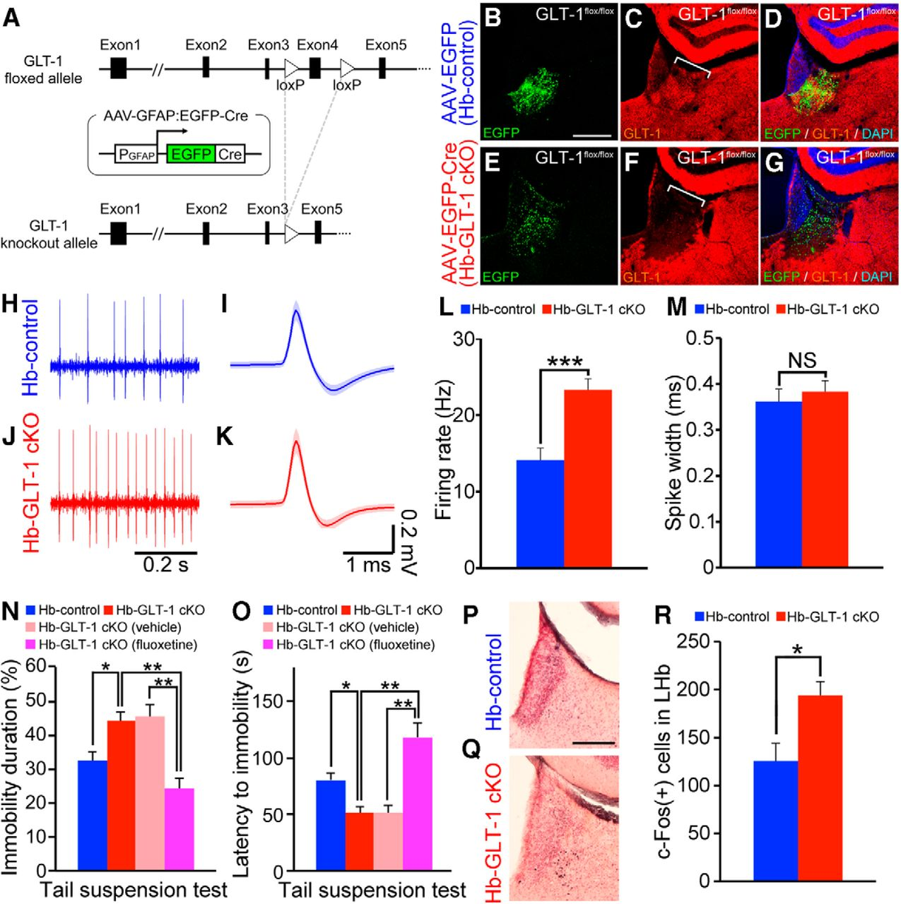 Glial Dysfunction In The Mouse Habenula Causes Depressive Like Led Bargraph Driver Circuit Diagram Tradeoficcom Download Figure