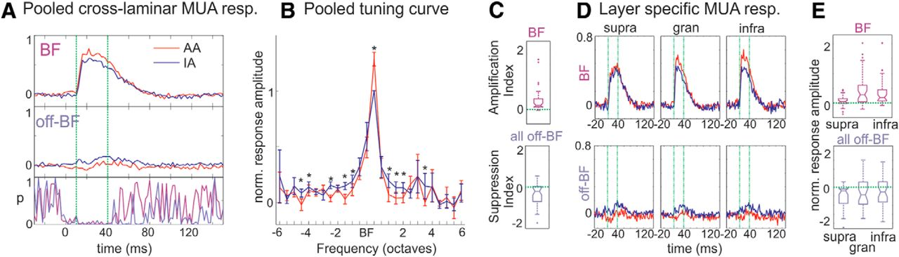 Layer Specific Sharpening of Frequency Tuning by Selective