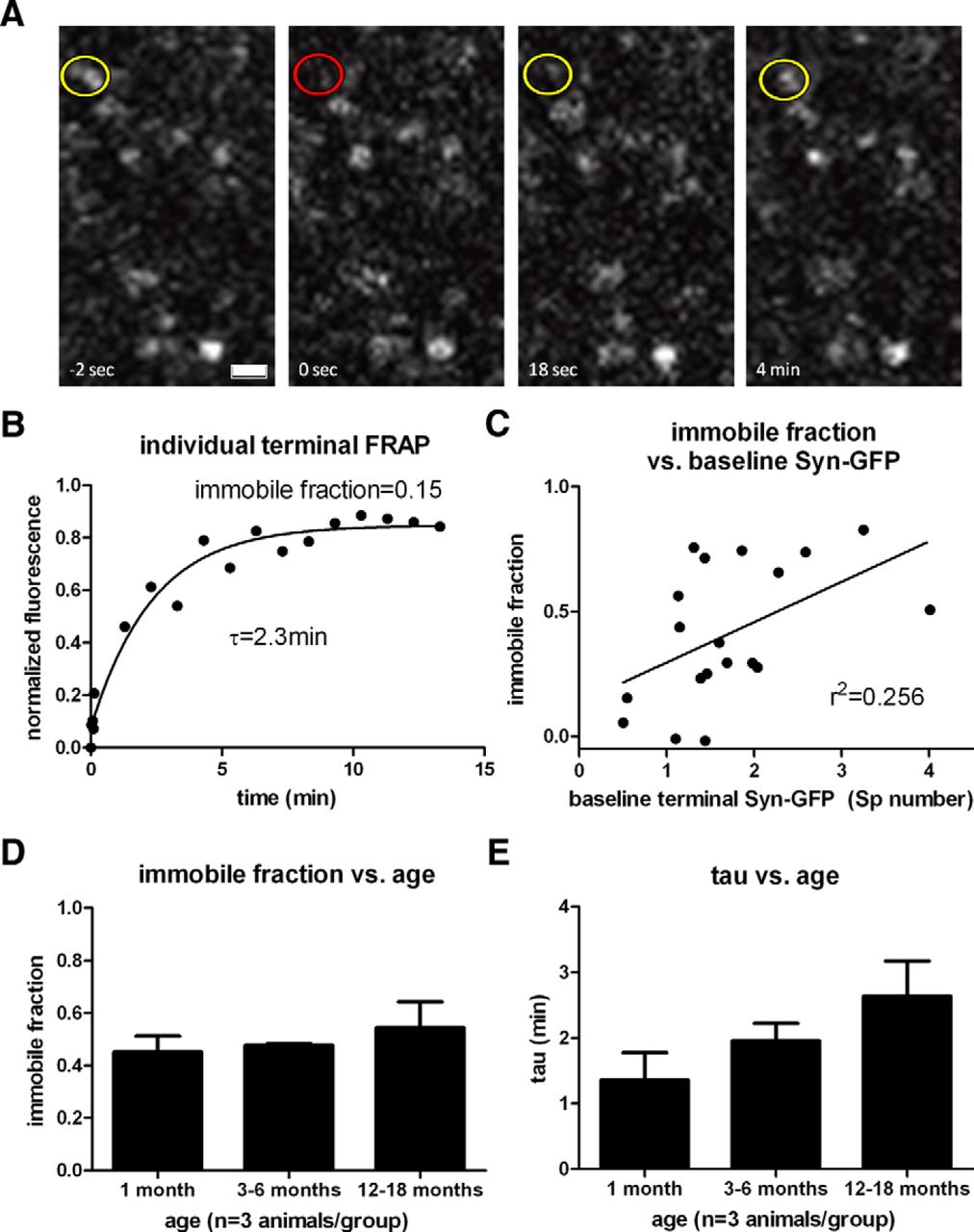 Presynaptic Alpha-Synuclein Aggregation in a Mouse Model of