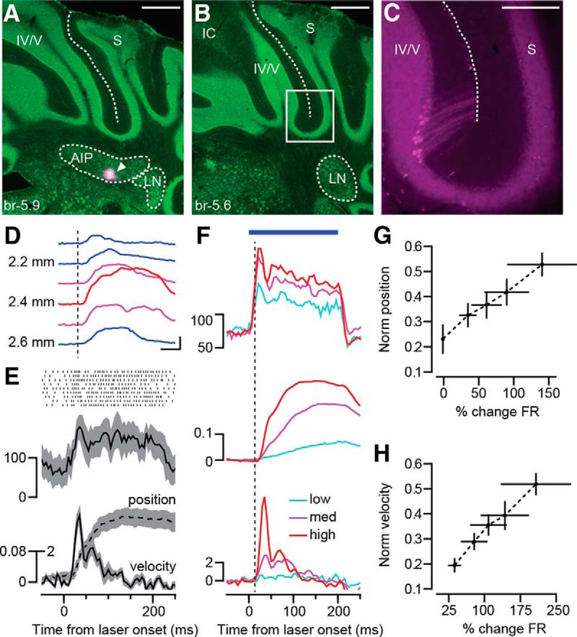 Precise Control of Movement Kinematics by Optogenetic