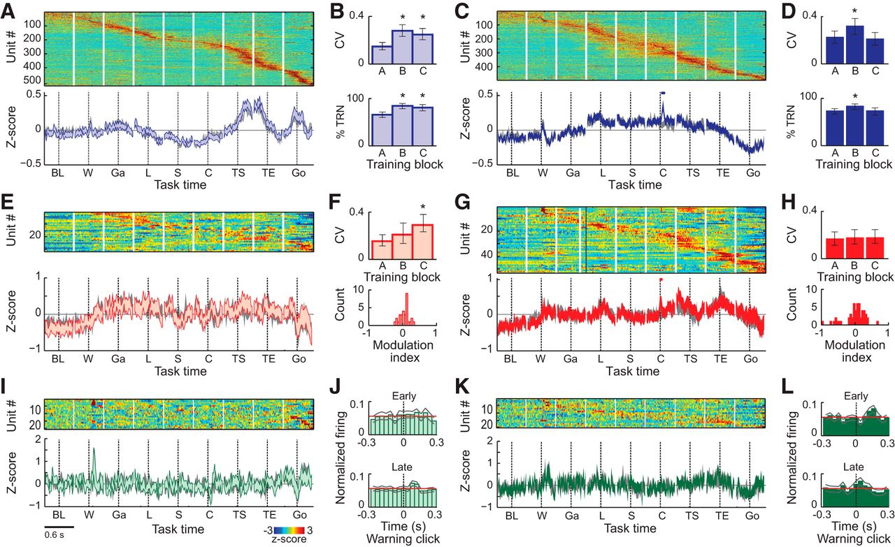 Differential Entrainment and Learning-Related Dynamics of Spike and