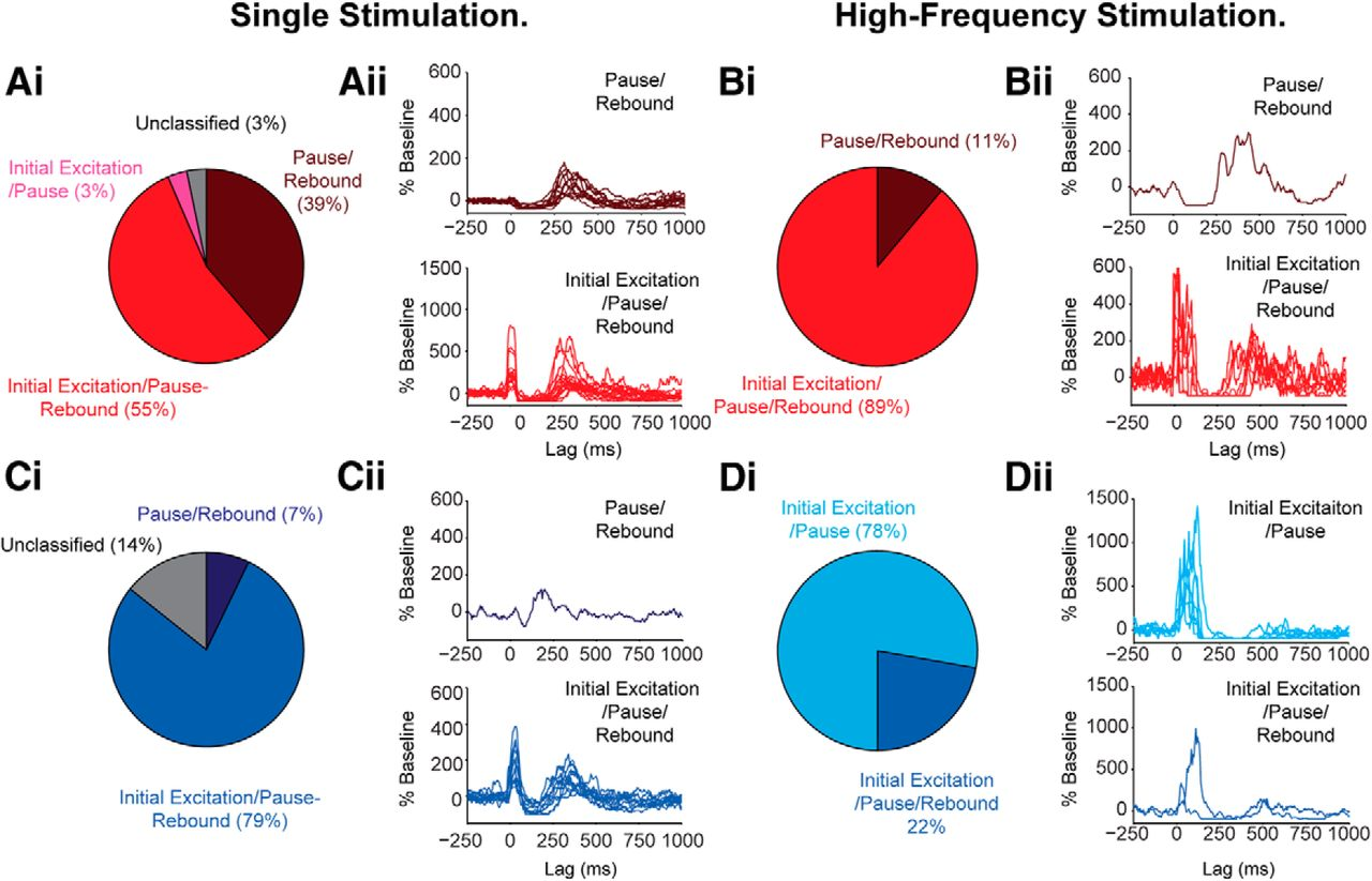 Cortical and Thalamic Excitation Mediate the Multiphasic Responses