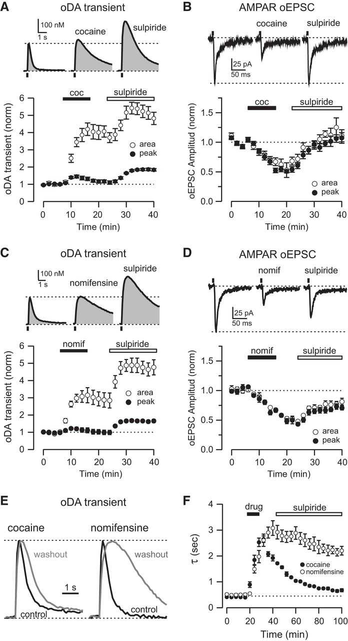 a study of dopamine and cocaine Dopamine rhythms in health and addiction - dopamine is a chemical signal since half of the participants in the study will have a diagnosis of cocaine use.