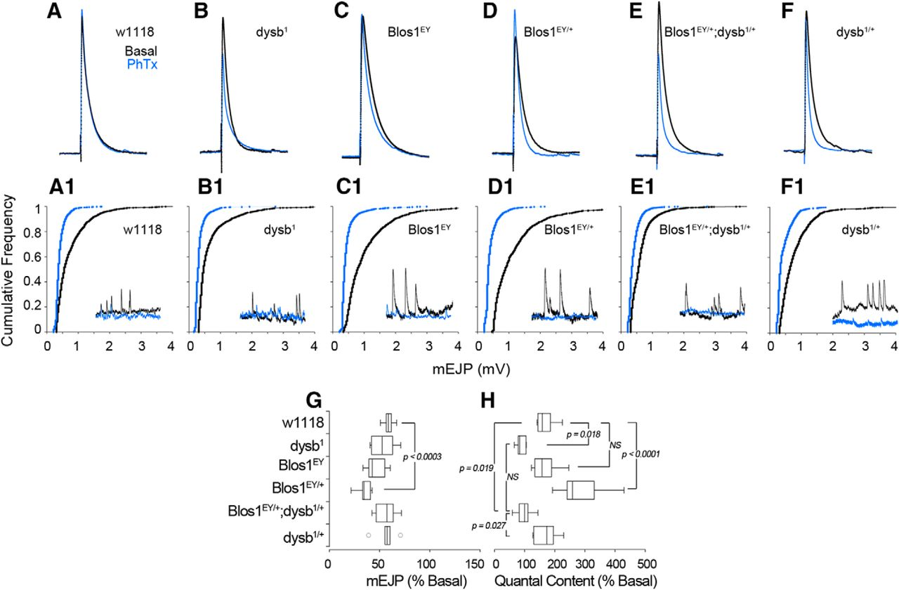 Gene Dosage In The Dysbindin Schizophrenia Susceptibility Network 1995 Trans Am Cooling Fan Wiring Diagram Download Figure