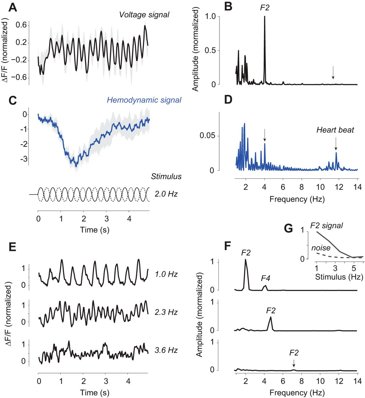 Imaging the Awake Visual Cortex with a Genetically Encoded Voltage