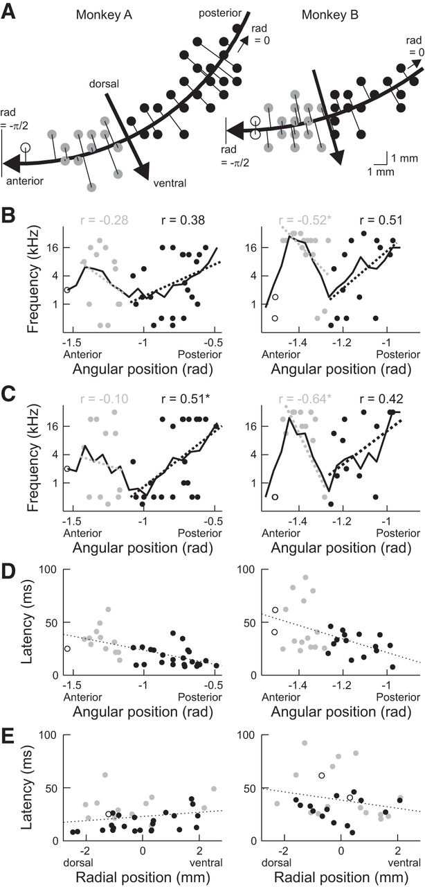 Auditory Properties in the Parabelt Regions of the Superior