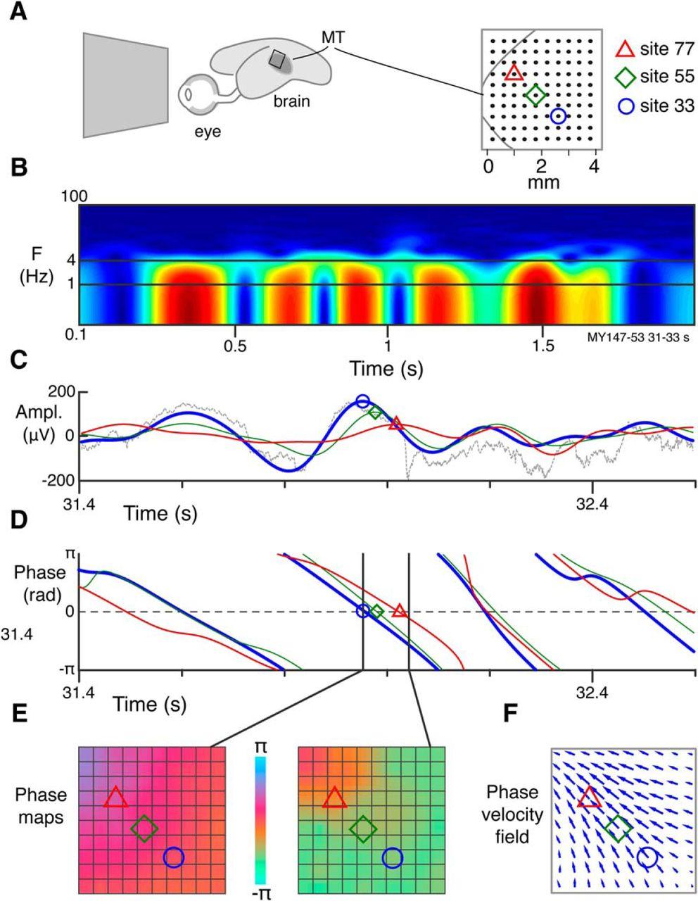 Emergence Of Complex Wave Patterns In Primate Cerebral Cortex Suzuki Gn 125 Electric Circet Pdf Download Figure
