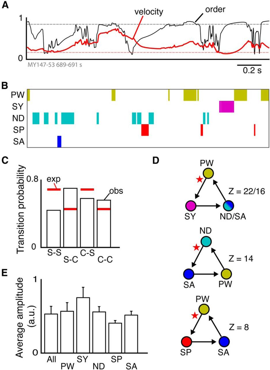 Emergence Of Complex Wave Patterns In Primate Cerebral Cortex Circuit Together With Eeg Diagram Simple Likewise Voltage Download Figure
