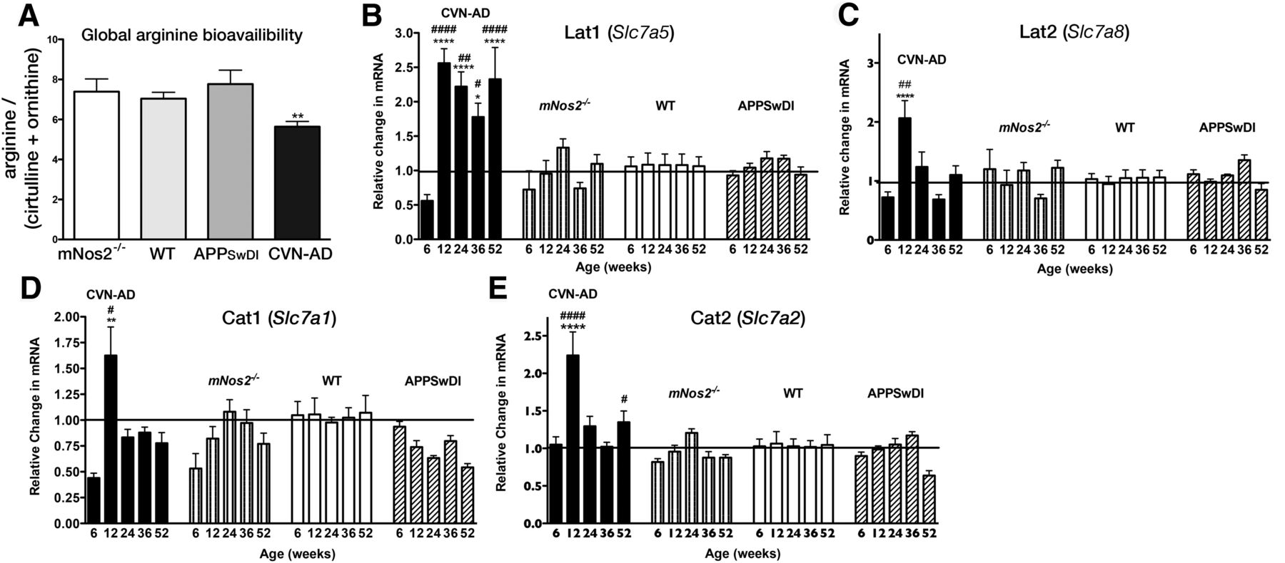 Arginine Deprivation and Immune Suppression in a Mouse Model