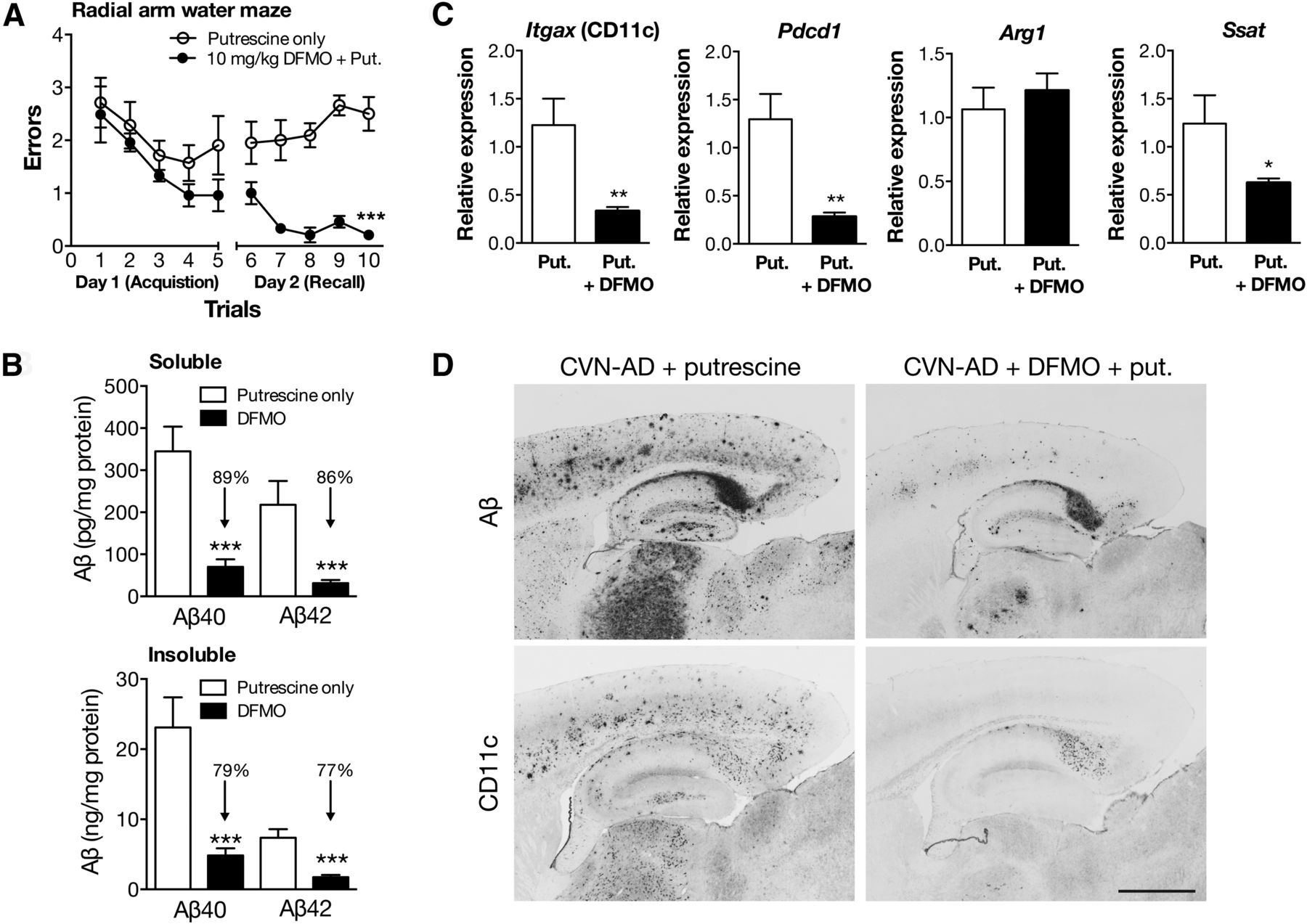 Arginine Deprivation And Immune Suppression In A Mouse