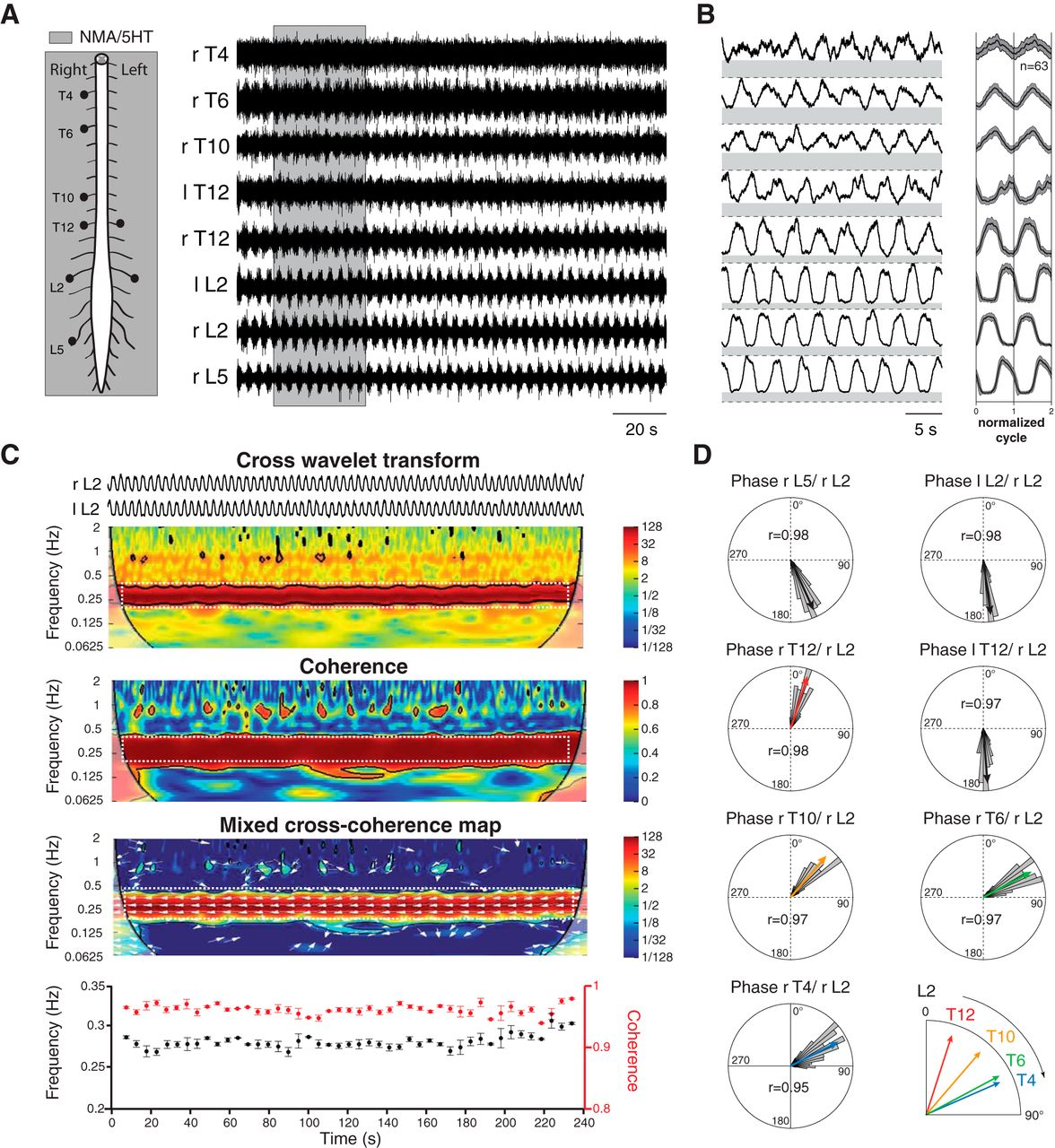 Origin of Thoracic Spinal Network Activity during Locomotor