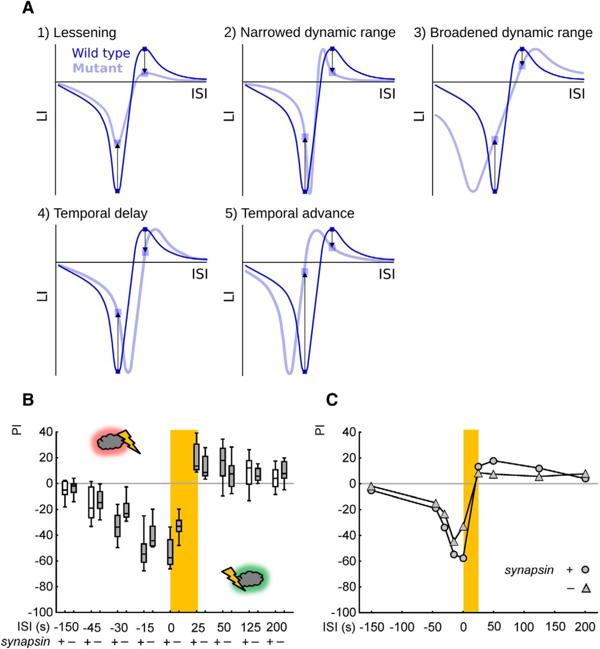 Synapsin Determines Memory Strength After Punishment And Relief