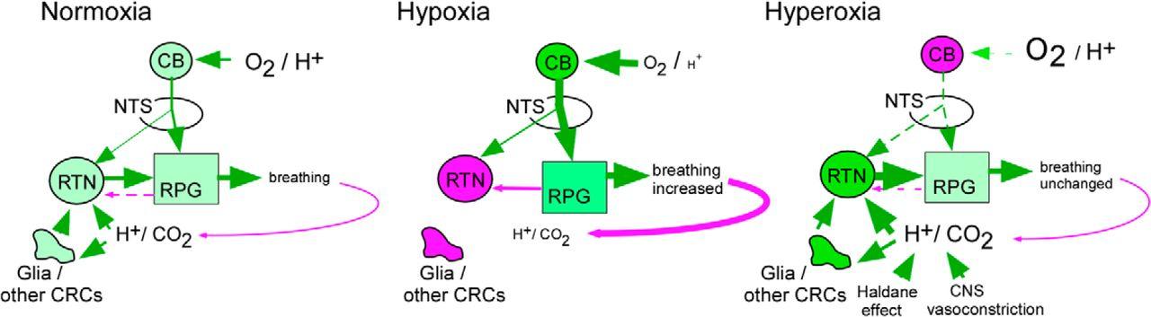 Hypoxia Silences Retrotrapezoid Nucleus Respiratory