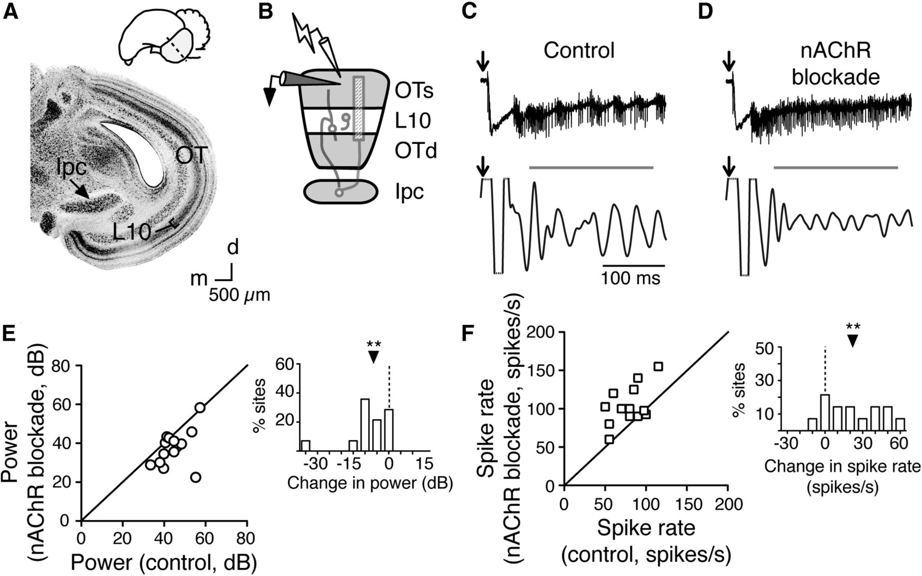 Cholinergic Control Of Gamma Power In The Midbrain Spatial Attention And Circuit Download Figure