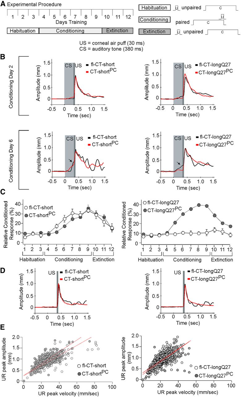 Weak Signal Amplifier Circuit Diagram Composed Of Magnetosensitive Spinocerebellar Ataxia Type 6 Protein Aggregates Cause Deficits In Download Figure
