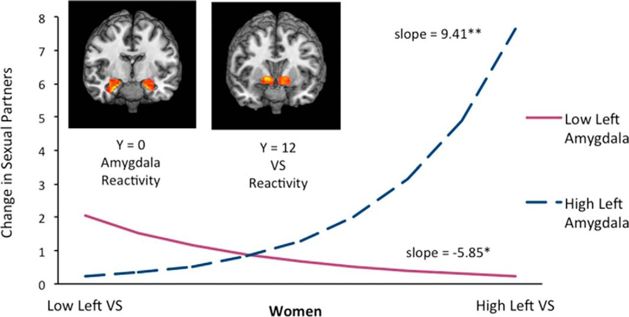 Differential Patterns of Amygdala and Ventral Striatum