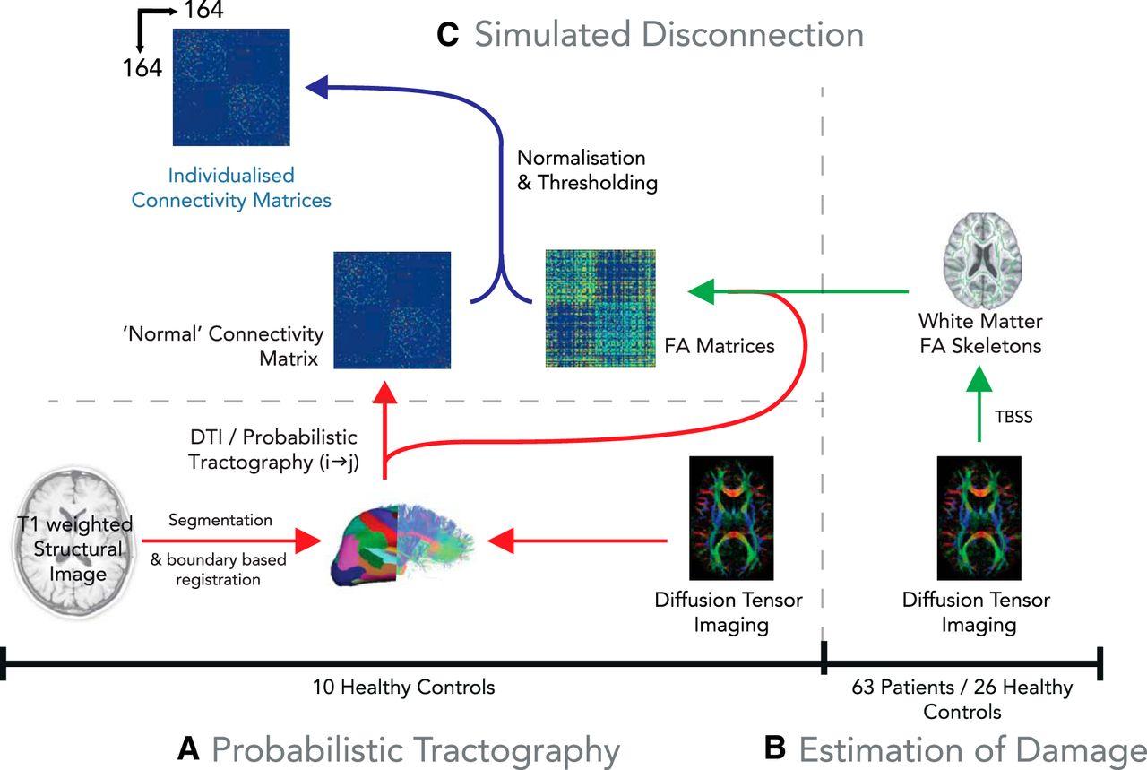 Cognitive flexibility through metastable neural dynamics is download figure toneelgroepblik Choice Image