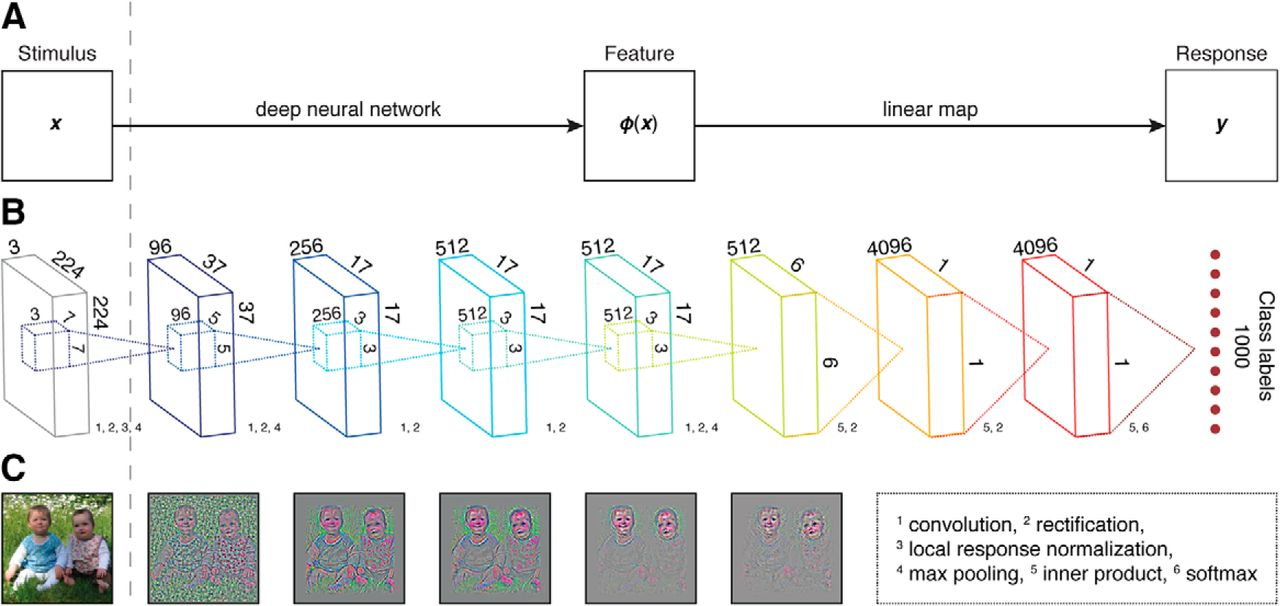 Deep Neural Networks Reveal a Gradient in the Complexity of Neural