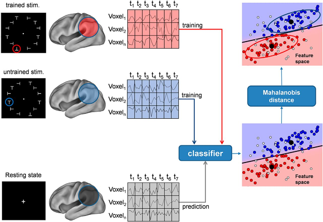 Visual Learning Induces Changes in Resting-State fMRI