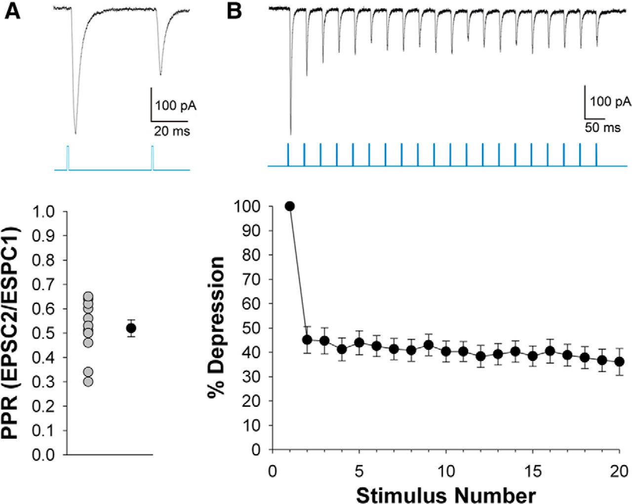 Retinal and tectal driver like inputs converge in the shell of download figure biocorpaavc