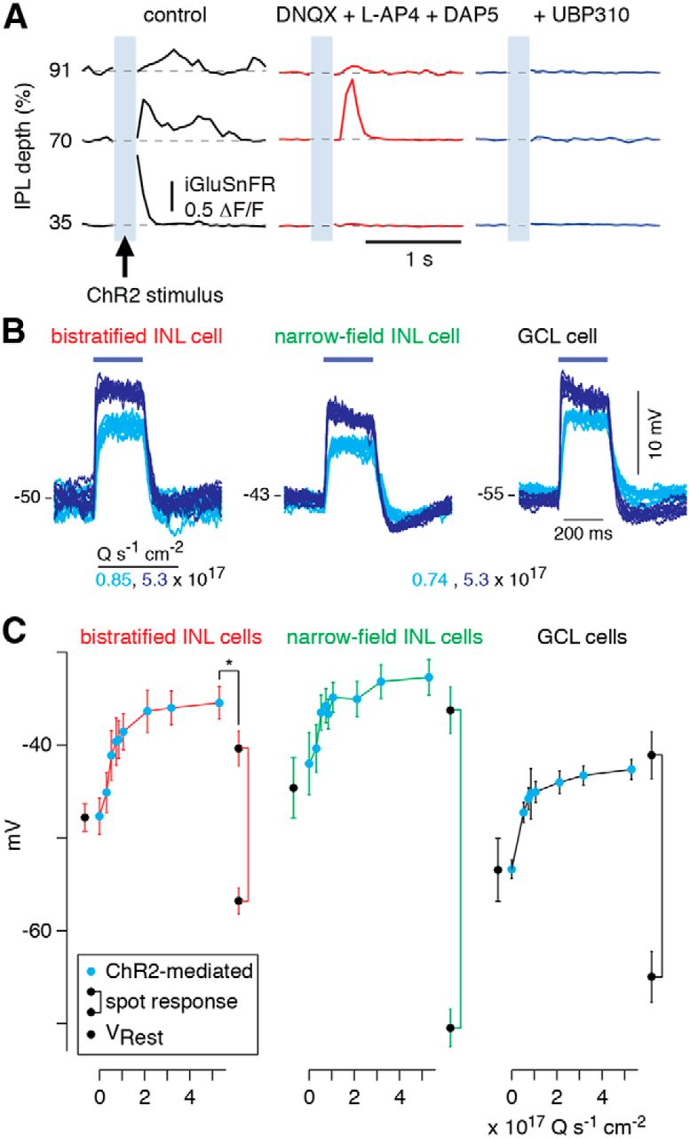 Function and circuitry of vip interneurons in the mouse retina download figure ccuart Choice Image