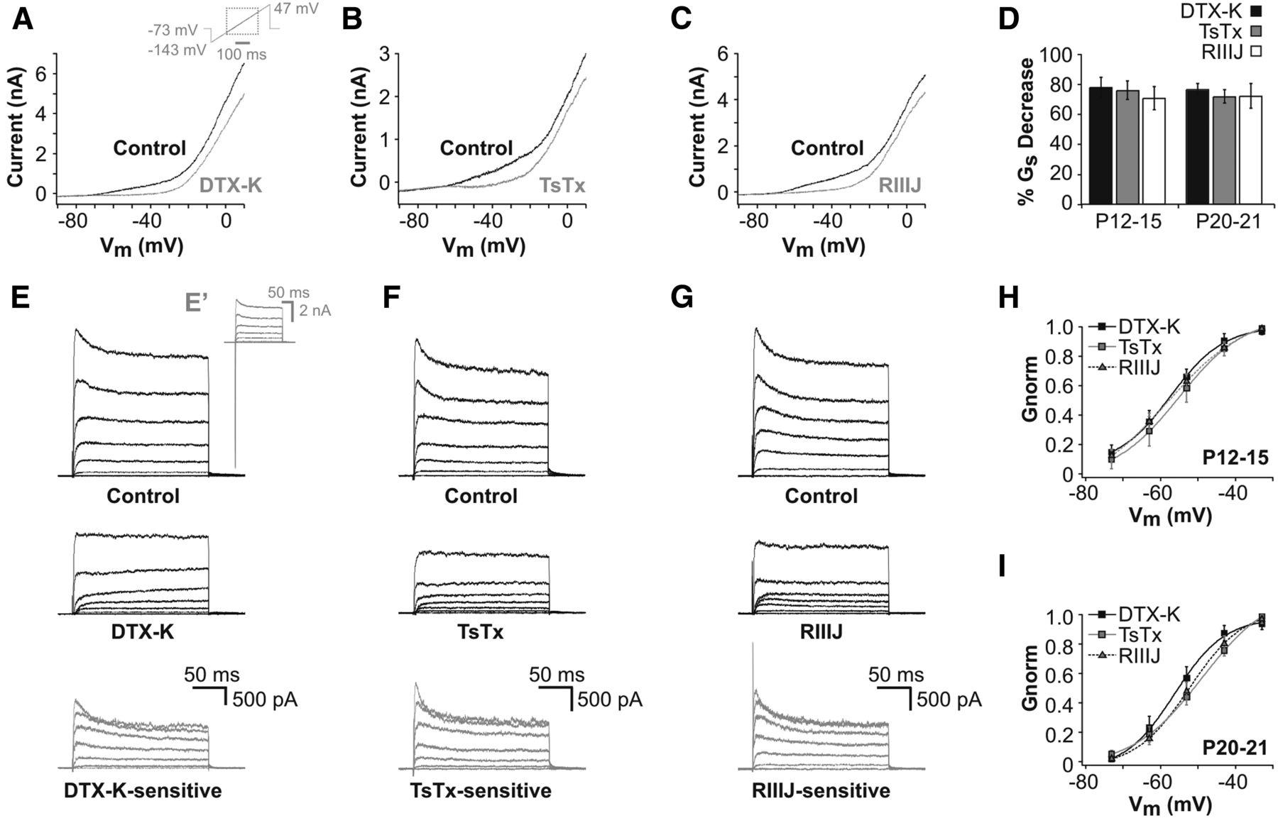 Phosphoinositide modulation of heteromeric kv1 channels adjusts download figure malvernweather Images