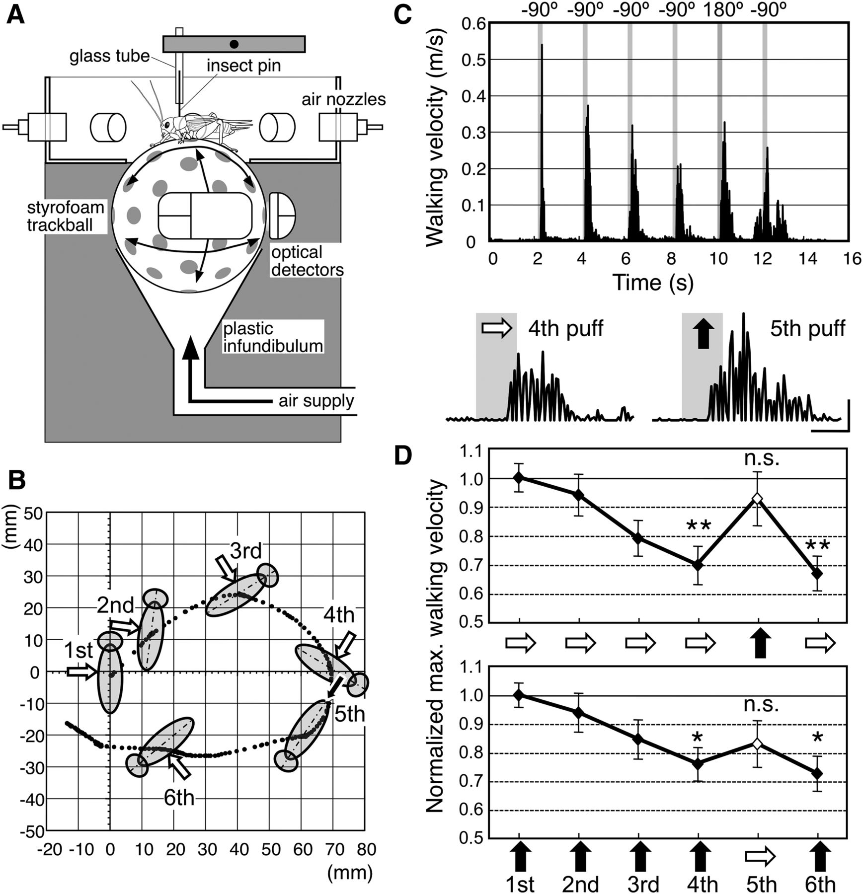 Direction Specific Adaptation In Neuronal And Behavioral Responses Wind Sound Effects Circuit Download Figure