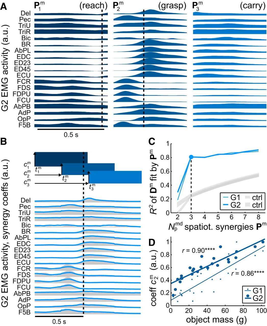 Representation of Muscle Synergies in the Primate Brain