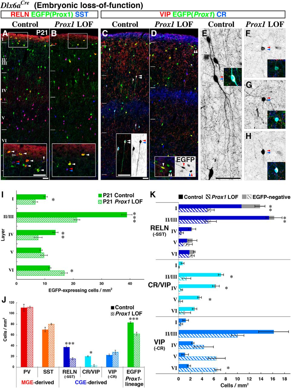 Prox1 Regulates the Subtype-Specific Development of Caudal