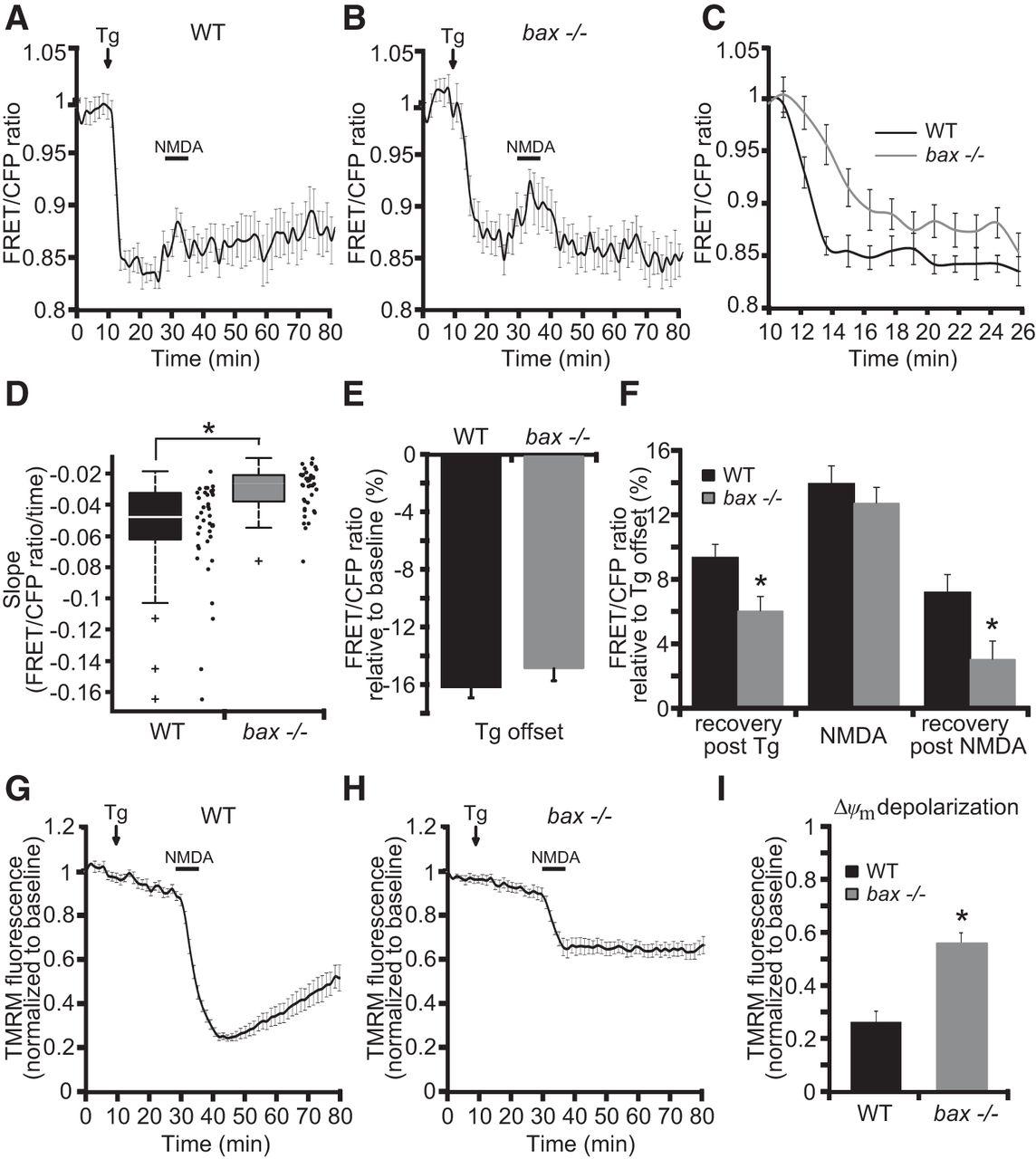 Bax Regulates Neuronal Ca2+ Homeostasis | Journal of