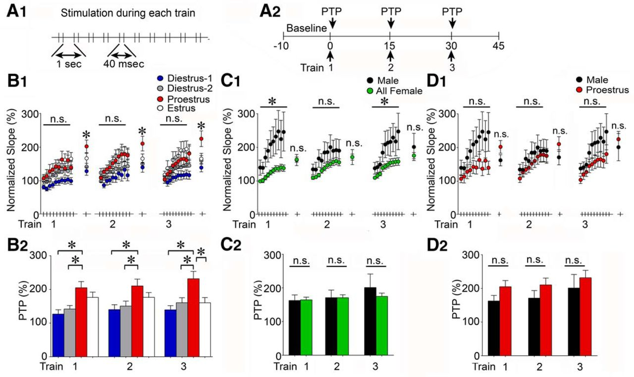 Opioid Receptor Dependent Sex Differences In Synaptic Plasticity Back Gt Images For Bean Germination Diagram Download Figure