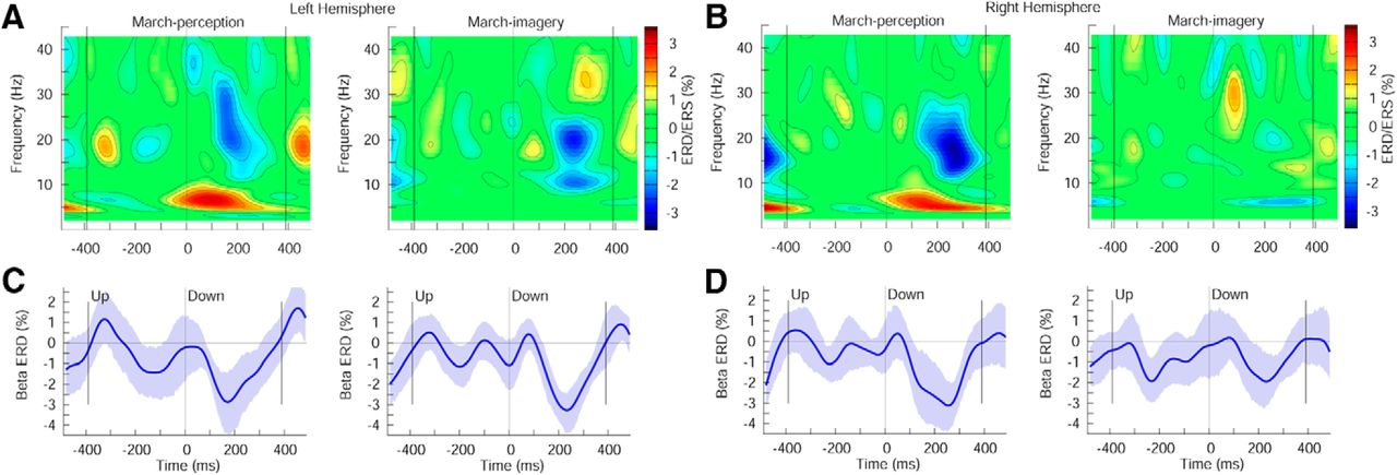 Beta-Band Oscillations Represent Auditory Beat and Its Metrical