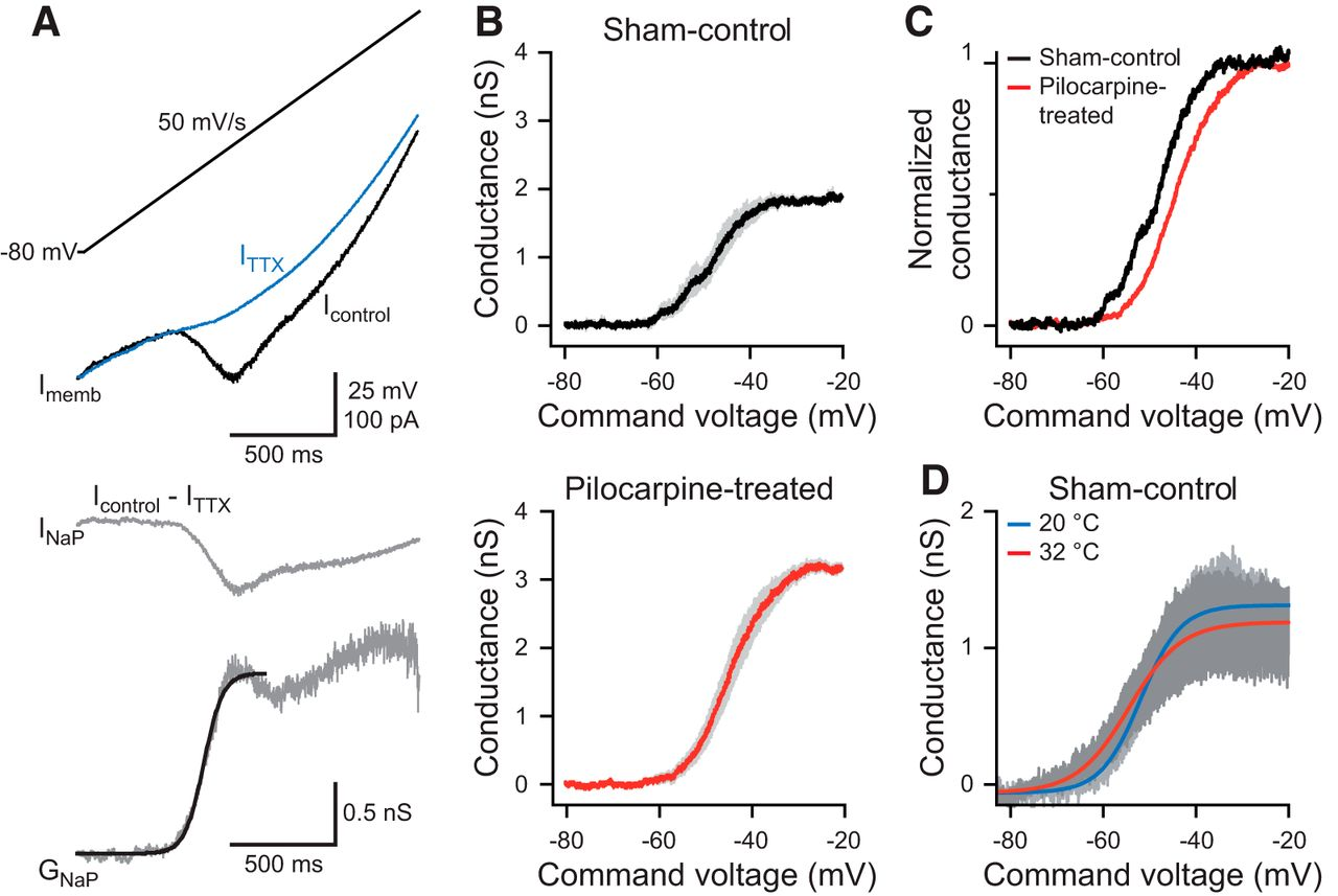Downregulation Of Spermine Augments Dendritic Persistent Sodium Voltage Is Ramp From 22v To 26v And Resulted Load Switch Download Figure