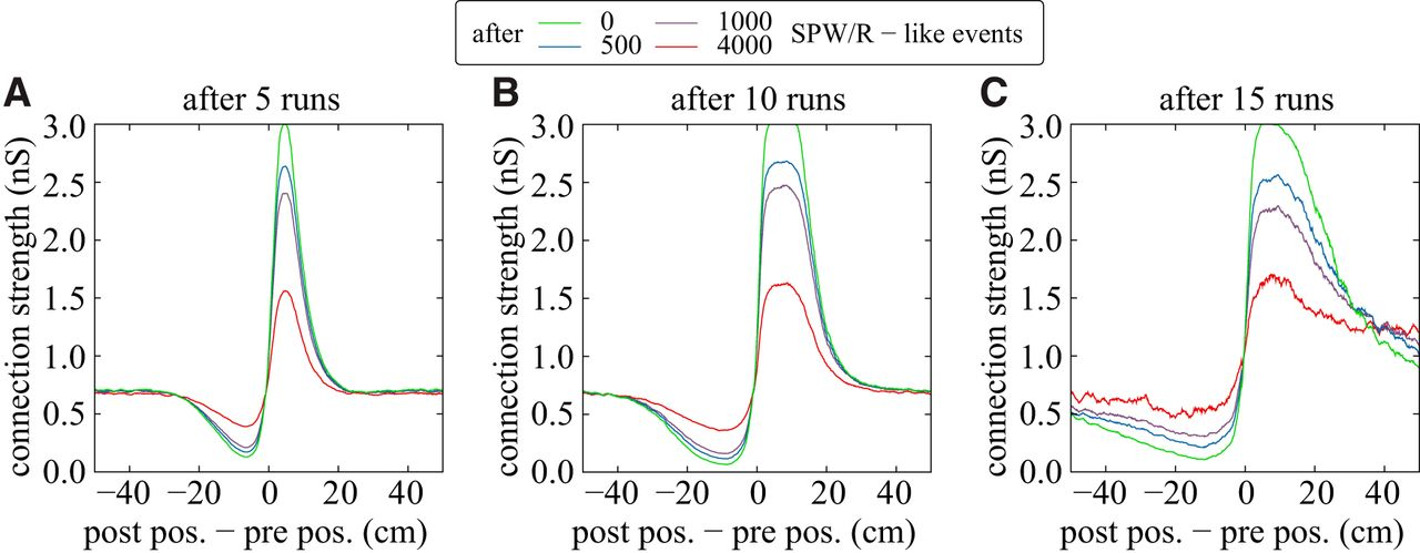 A Unified Dynamic Model for Learning, Replay, and Sharp-Wave/Ripples